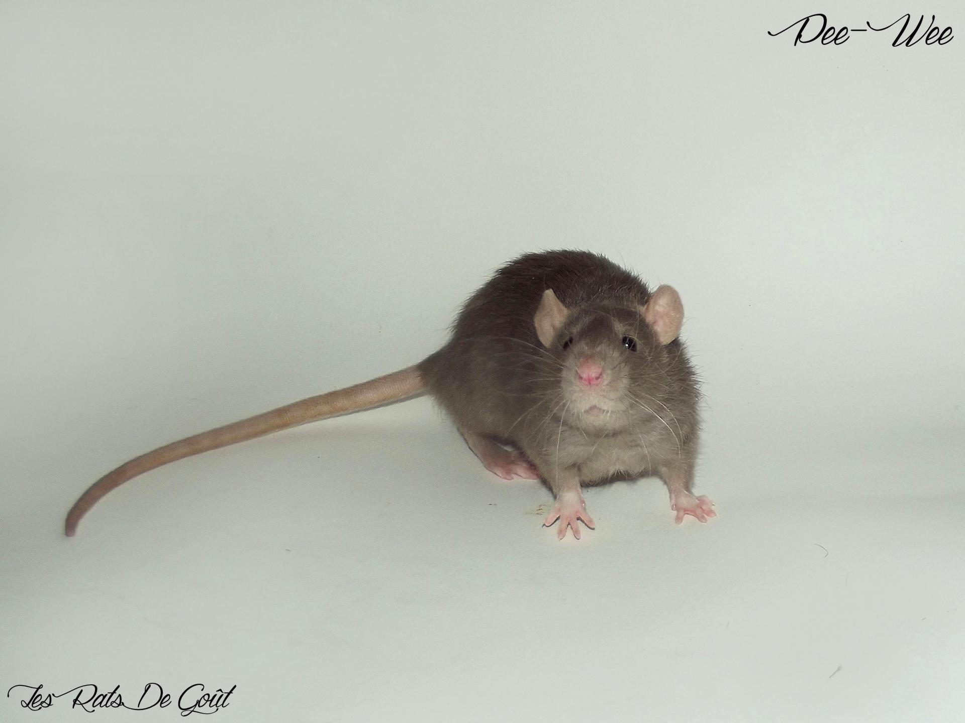 Male 20 01