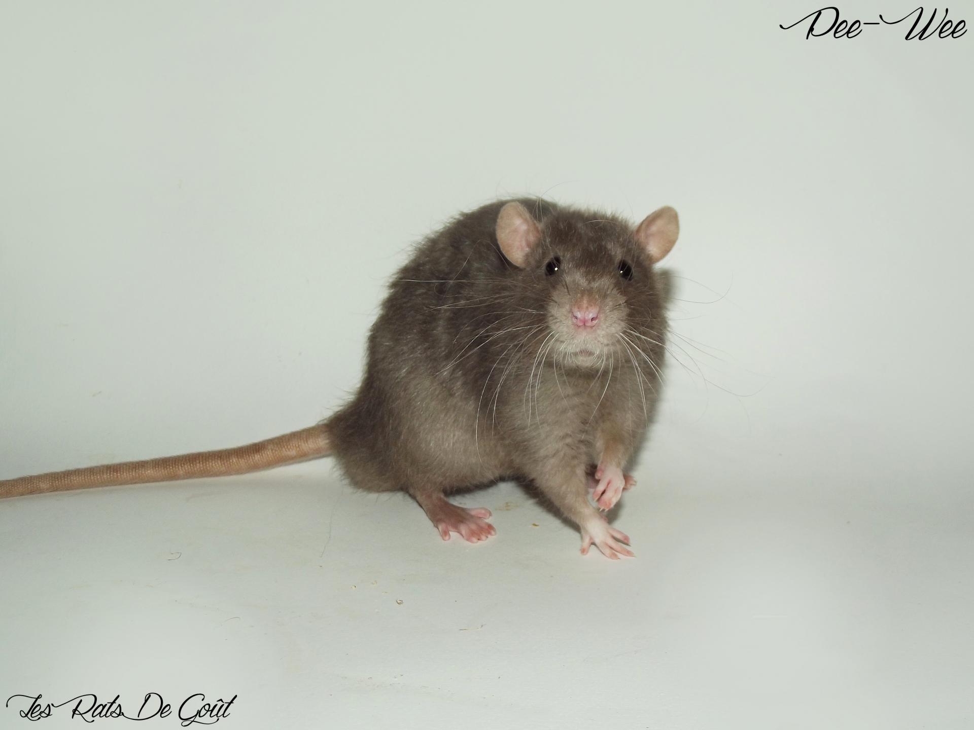 Male 20 3